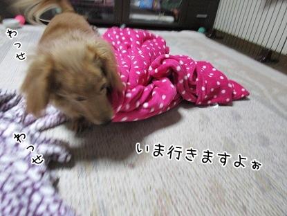 kinako4117.jpg