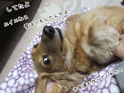 kinako4123.jpg