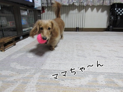 kinako4126.jpg