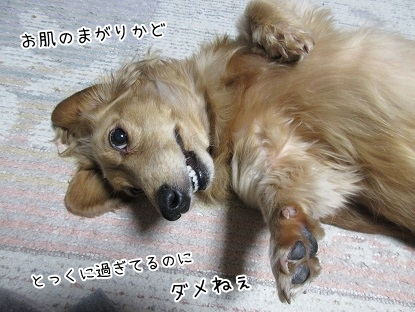kinako4137.jpg