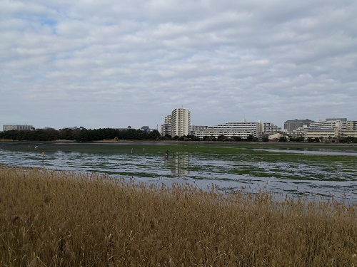 水鳥達の楽園『谷津干潟公園』と谷津ロール