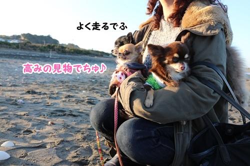 13_201601111202463a1.jpg