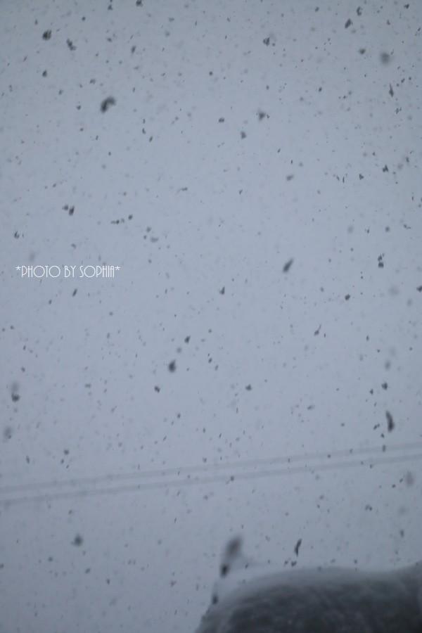 暴風雪、大雪、雷警報の朝Ⅱ