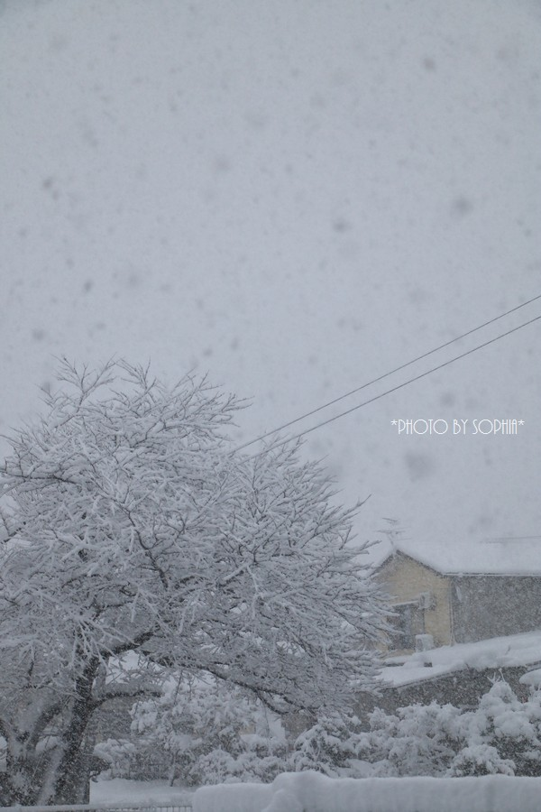 暴風雪、大雪、雷警報の朝