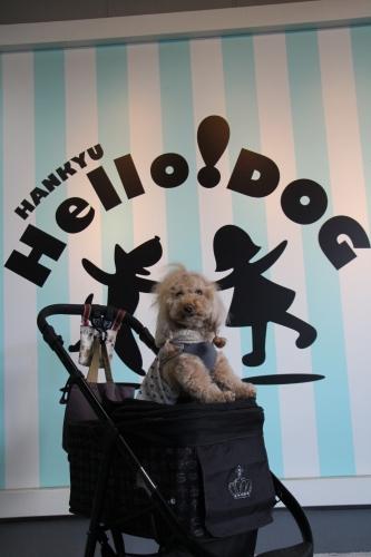 Hello!DOG
