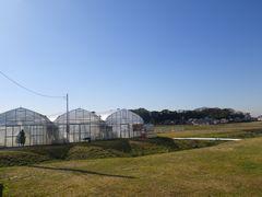 [写真]雲一つない青空とポレポレ農園のいちごハウス
