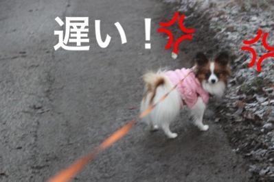 fc2blog_20151221154715a41.jpg
