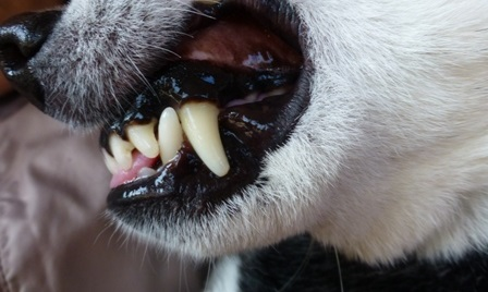2016歯石除去10
