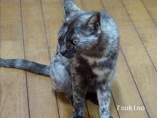 chichibi8_201601051151488d8.jpg