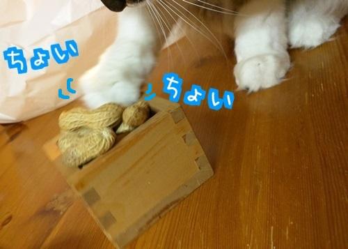 201602032048063a1.jpg