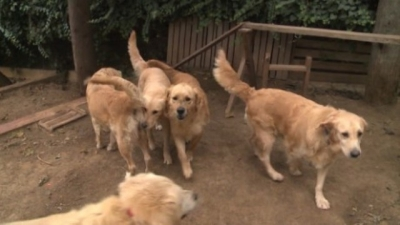 turkey-homeless-dogs-cnn.jpg