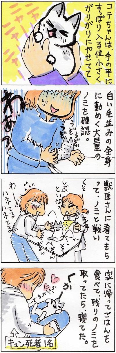 コテちゃん3-3