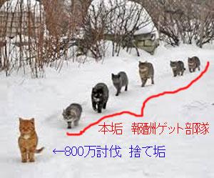 猫で捨て垢作戦解説