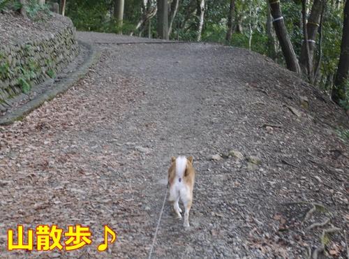 4山道散歩