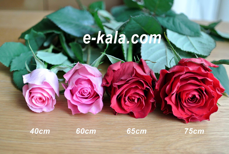 rosesize3.jpg