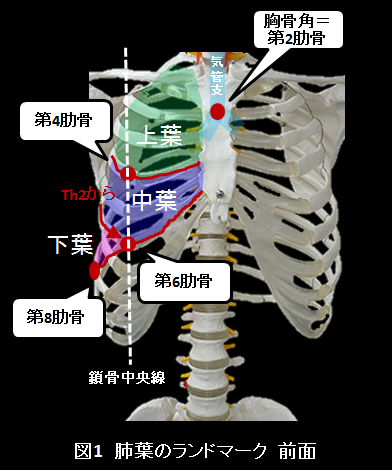 NEXT STAGE CLINICAL PHYSICAL THERAPY ~リハ知識の理論と応用~