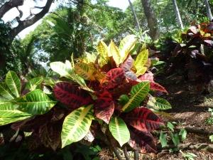園内の植物