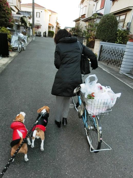 夕散歩の途中に,帰宅途中のママとバッタリ!その時,TARO&JIROは…?