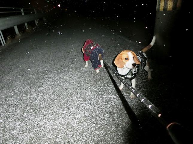 今日の京都の最低気温は-0.7℃。昨日,京都もようやく初雪が…。