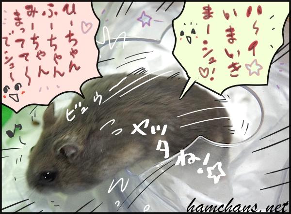 ハムスターお風呂3