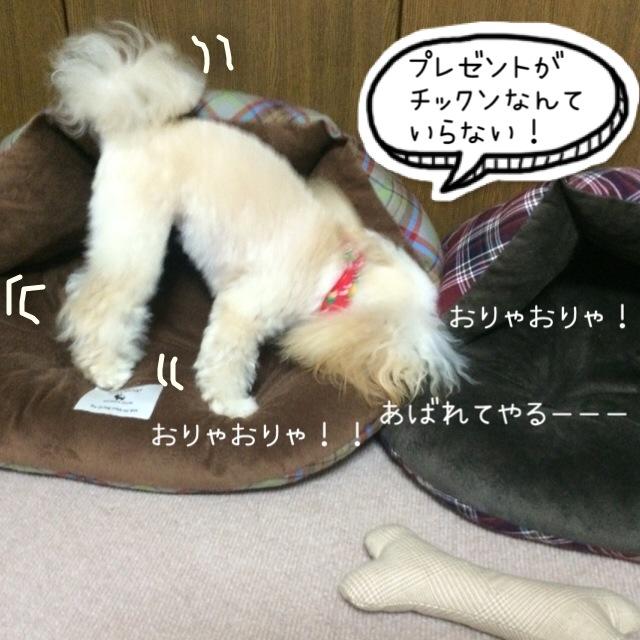 ココモコ Merry Christmas 2015 ~プレゼントがたくさん♪~5