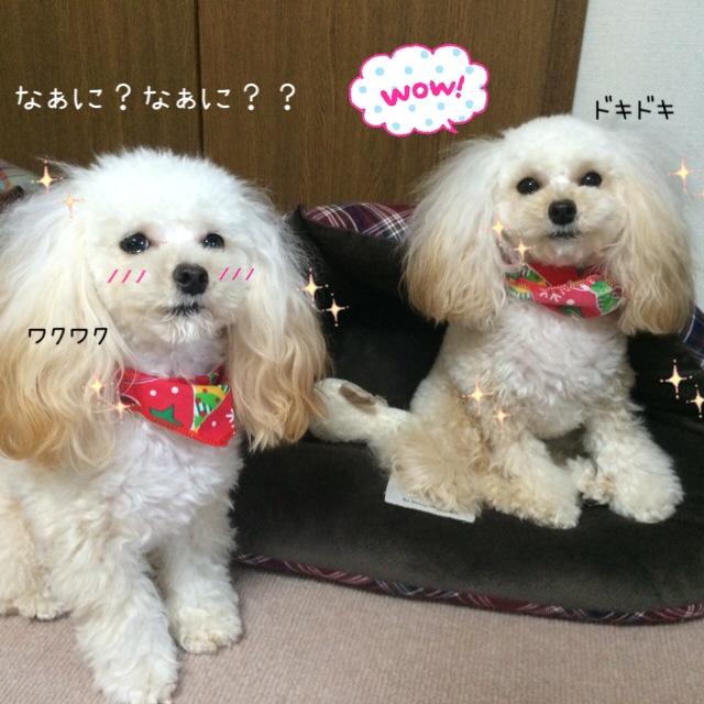ココモコ Merry Christmas 2015 ~プレゼントがたくさん♪~2