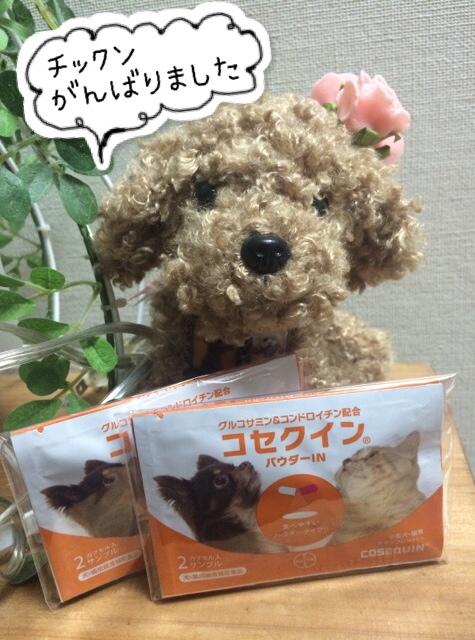 ココモコ Merry Christmas 2015 ~プレゼントがたくさん♪~7