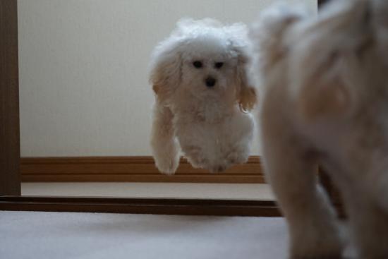 モコの飛行犬