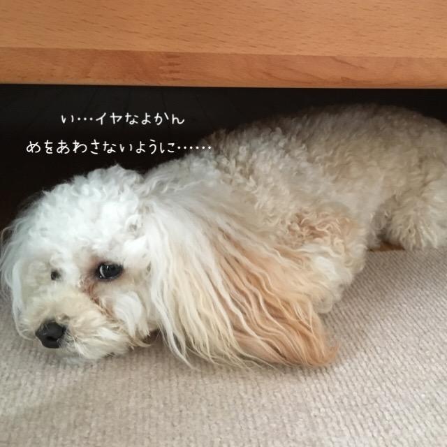 お家シャンプー chucks tokyo4