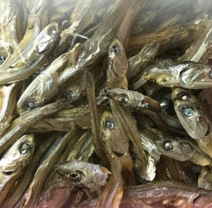 2016 0206 魚