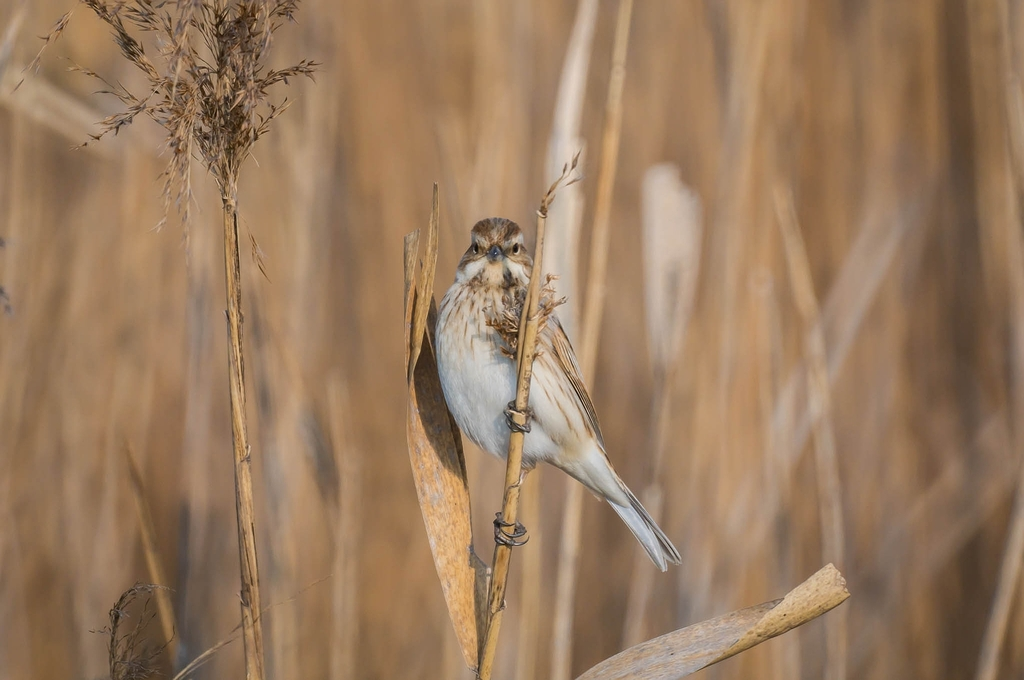 こちらを気にする鳥たち④(秋冬の鳥+α編) (10Pic)