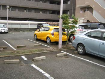 黄色のアクア-3