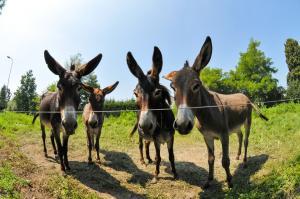 donkeys-896791_960_720_convert_20151222000653.jpg