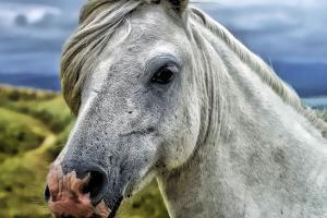 horse-head-58375_960_720_convert_20151229192452.jpg