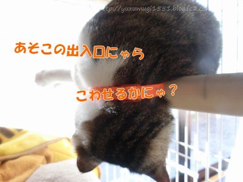 CIMG3246-1.jpg