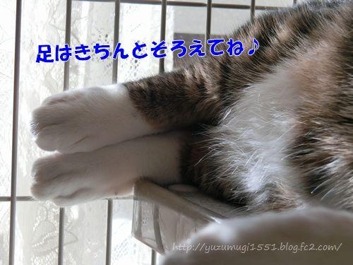 CIMG3257.jpg