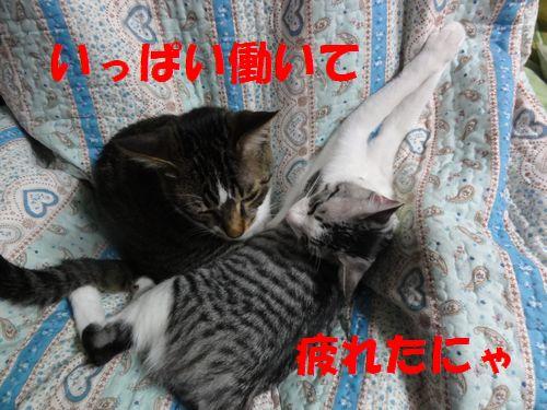 DSC03142.jpg