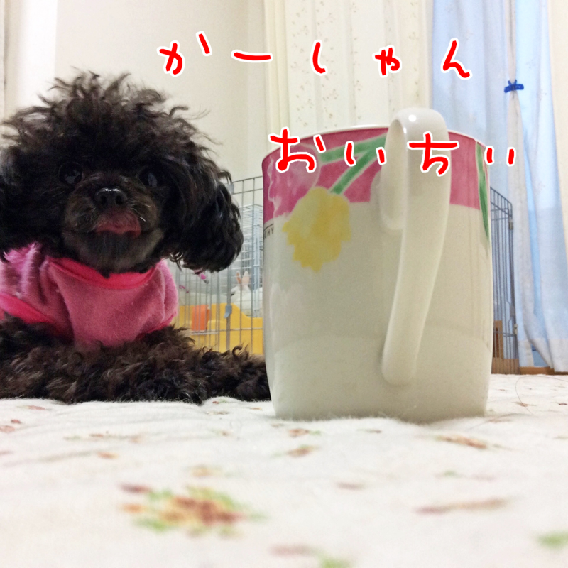 2015121120582287f.png